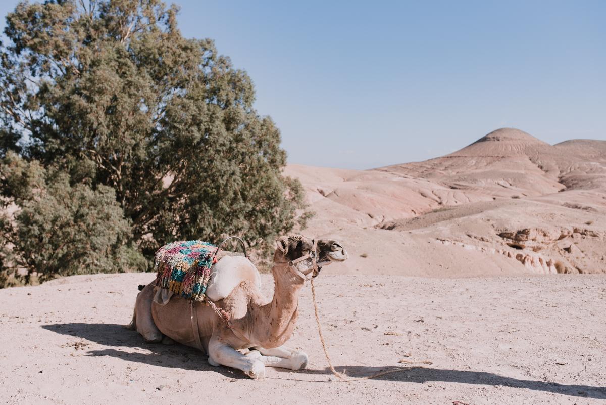 morocco wedding-57.jpg