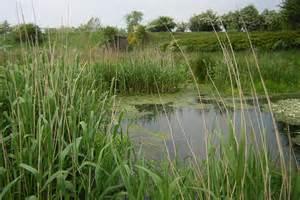 Preserving and restoring America's wetlands