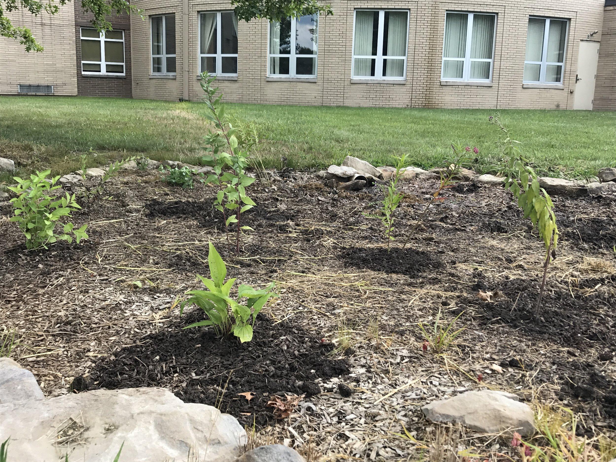 JAG Rain Garden plan installation