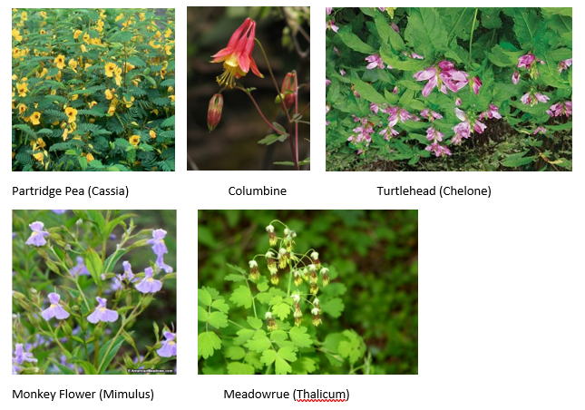 Pollinator Plants available for order