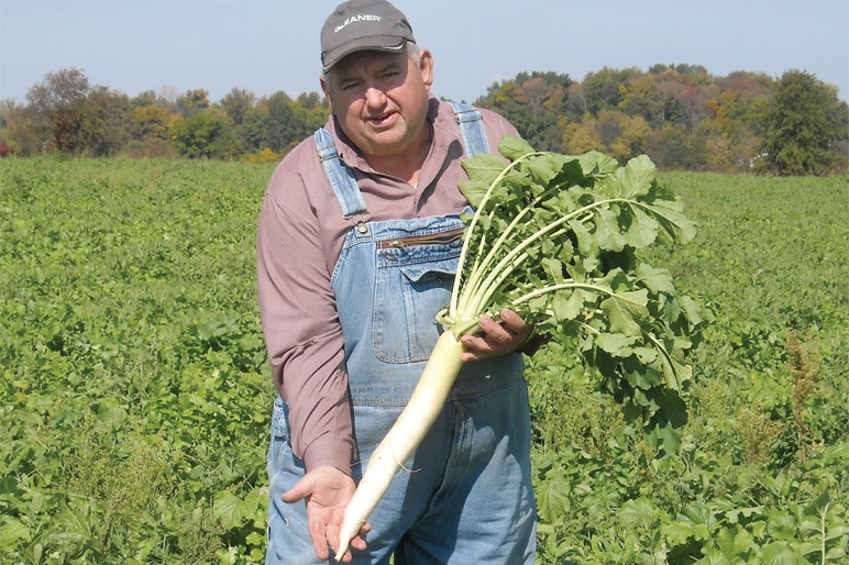 Dave Brandt with Tillage Radish