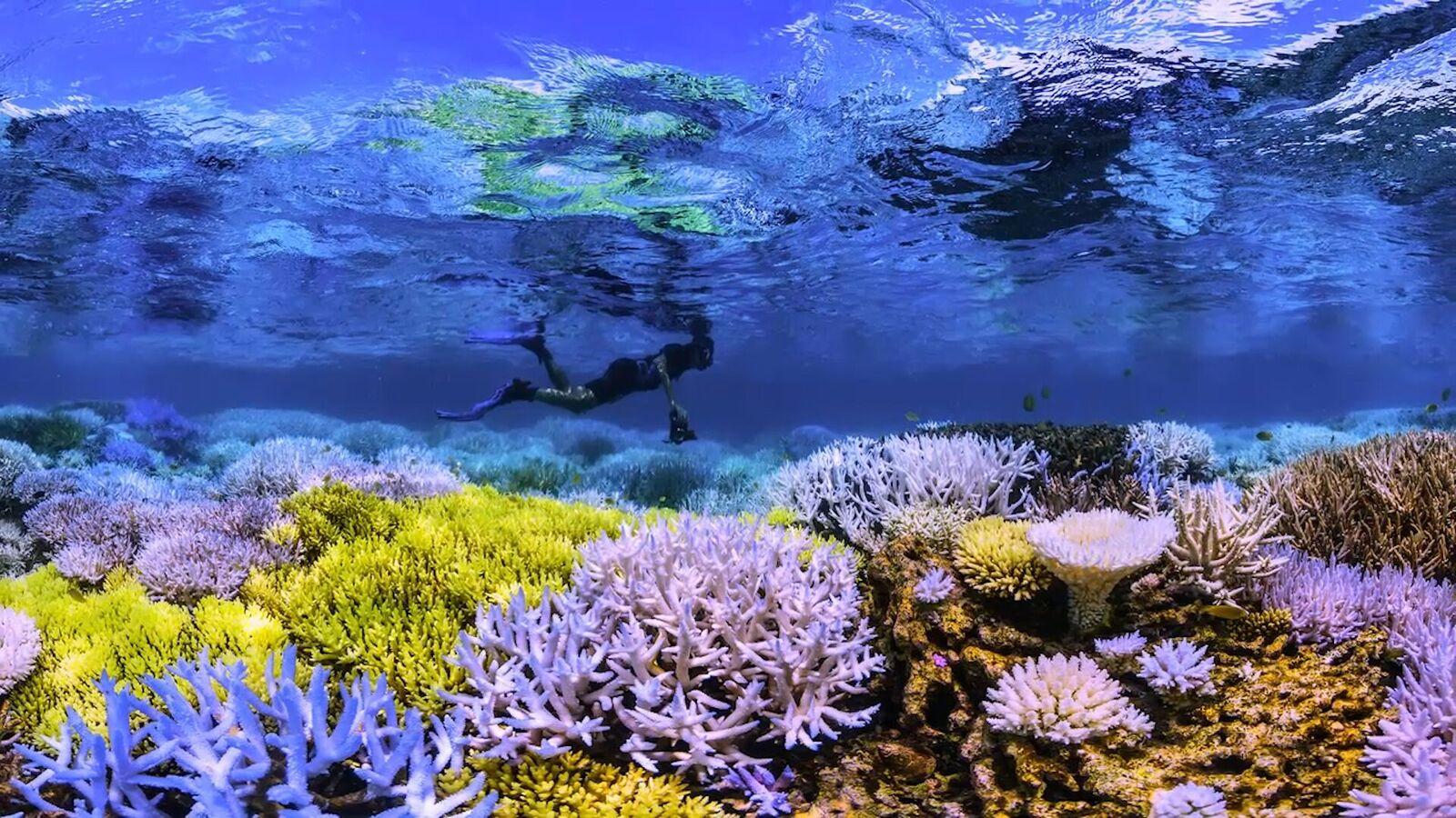 Flourescing Coral - Credit Netflix_preview.jpeg