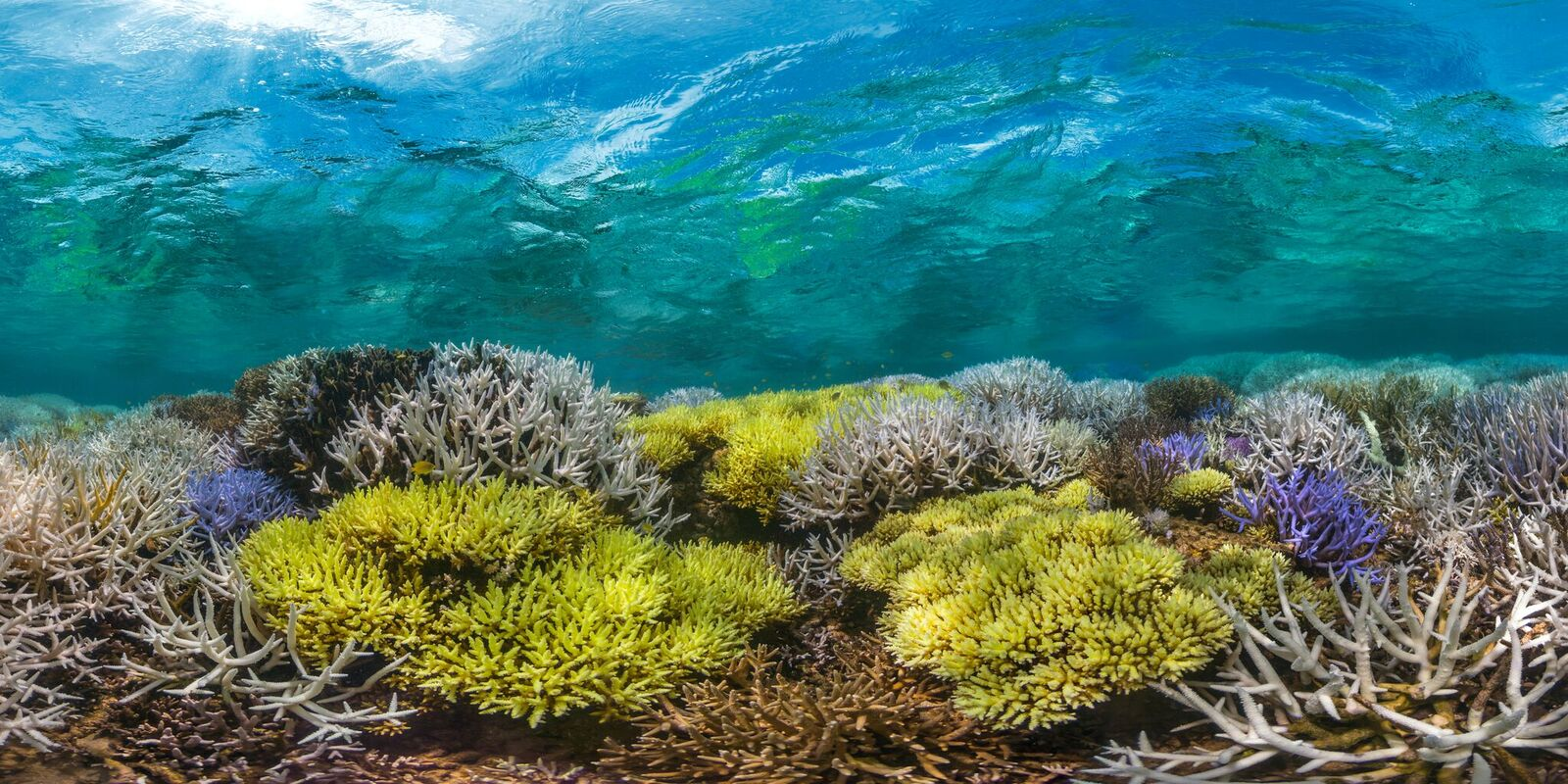 New Cal Panorama 04 - March 2016 - The Ocean Agency - XL Catlin Seaview Survey - Richard Vevers_preview.jpeg