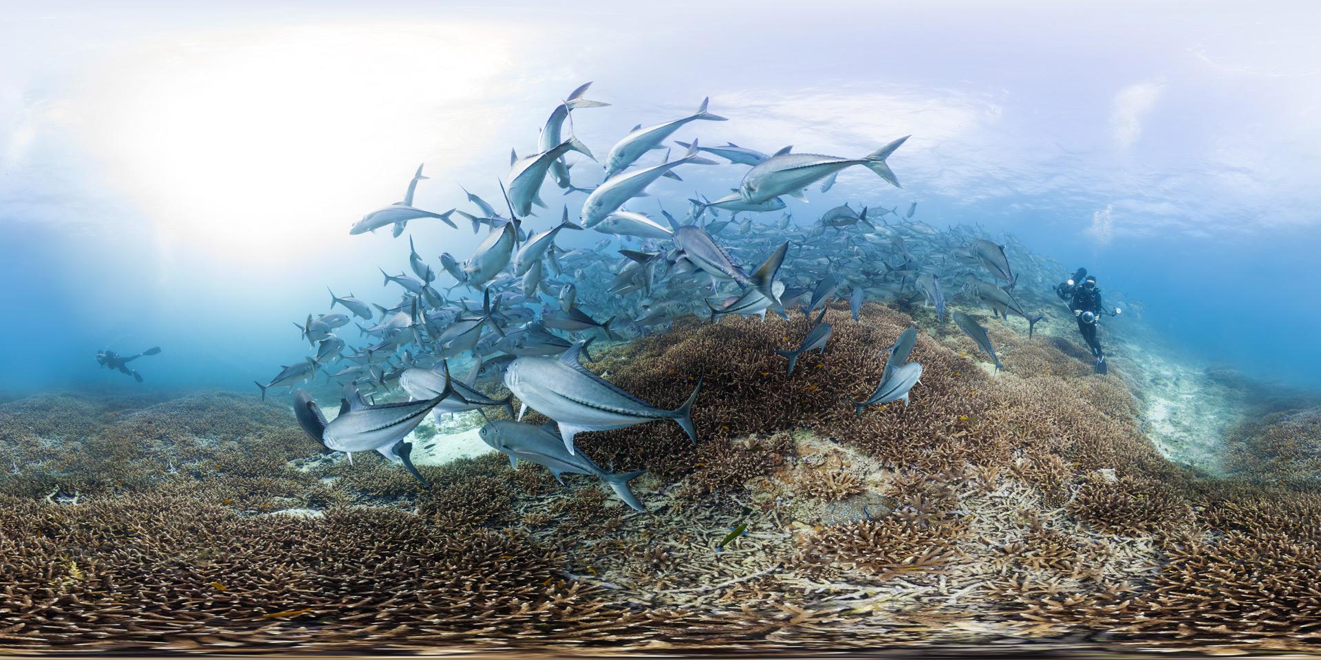 Trevally-at-Lady-Elliot-Island---Photo-By-The-Ocean-Agency_XLCatlin-Seaview-Survey_Christophe-Bailhache.jpg