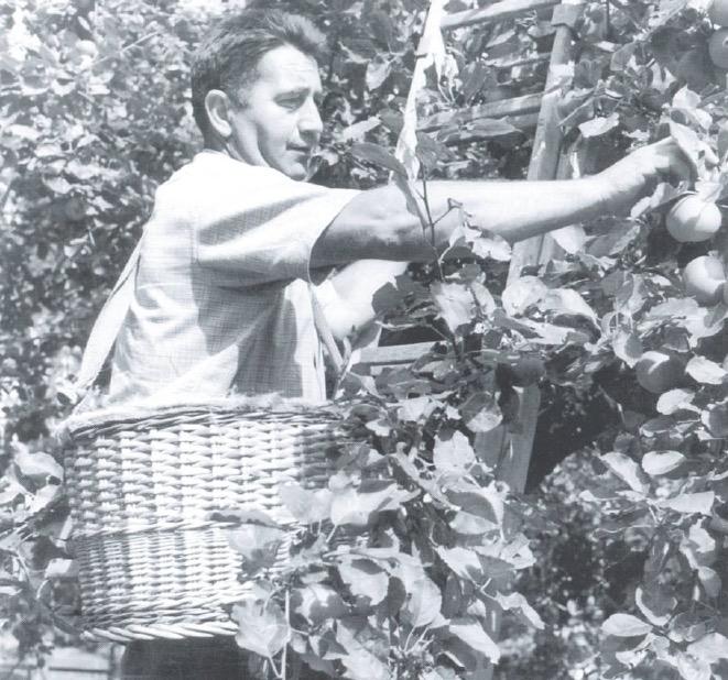 Emil Meier pflegte als Pionier Biologisch-dynamische Landbaumethoden, 1967