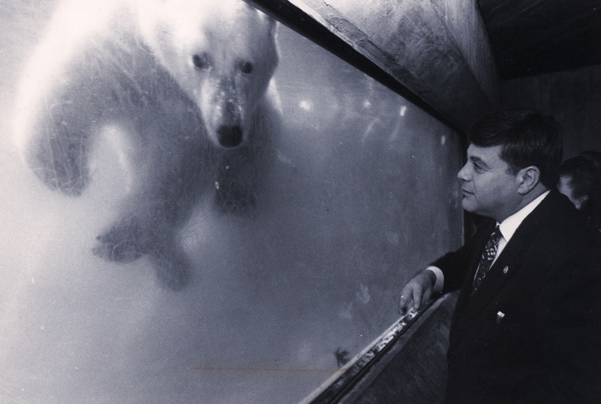 """Buddy gets acquainted with a polar bear at the Roger Williams Park Zoo. He """"adopted"""" one of the polar bears as part of a fund-raising program.  Courtesy of The Providence Journal/Steve Szydlowski."""
