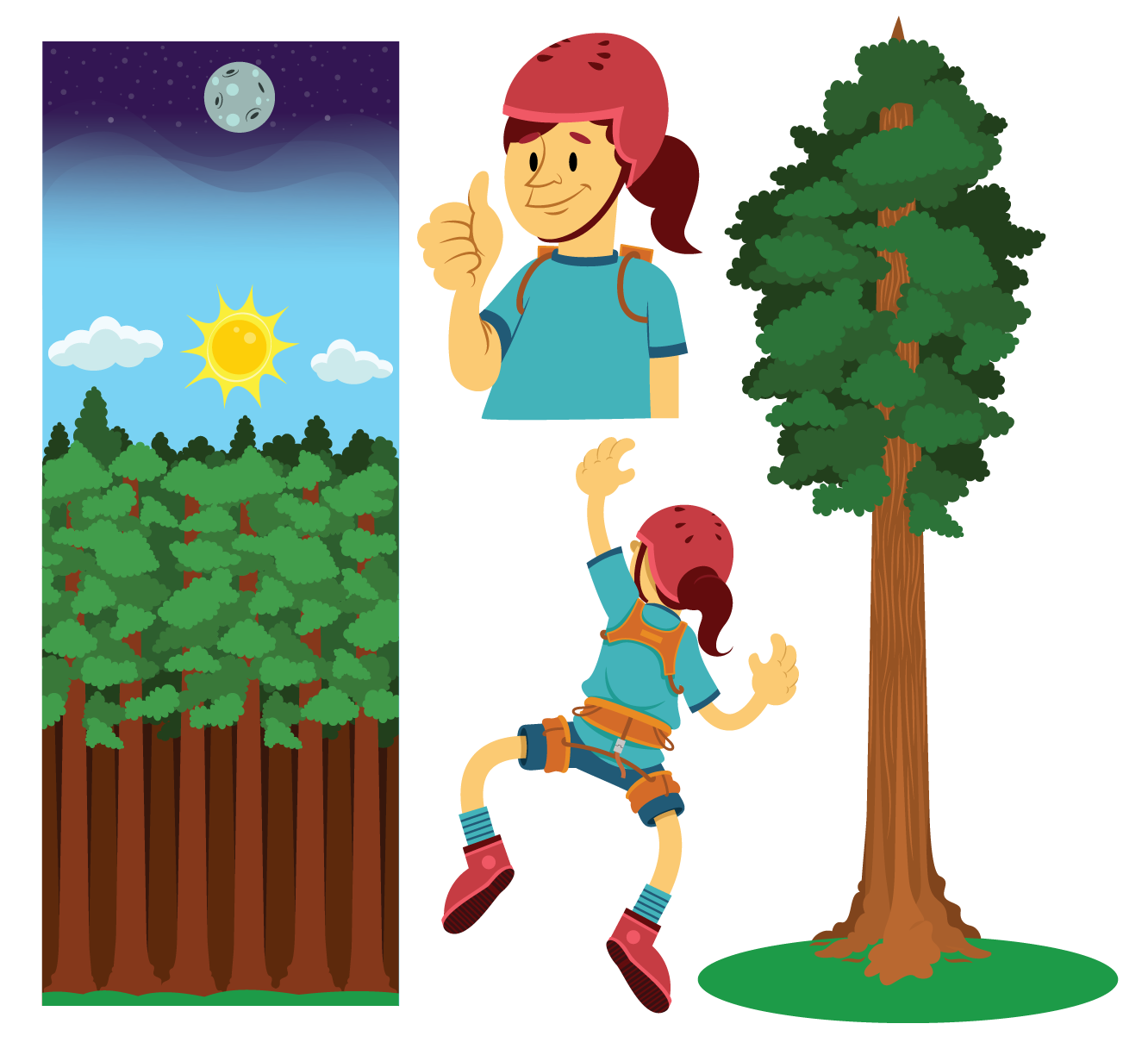 SequoiaTree-V4.png
