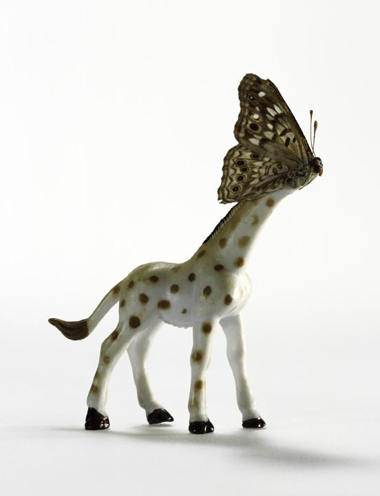 Giraffe Fly