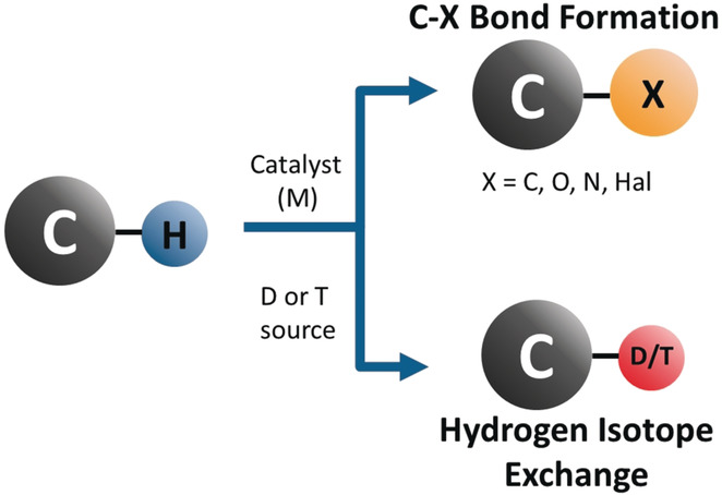 C−H Functionalisation for Hydrogen Isotope Exchange - Angew. Chem. Int. Ed. 2017, 57, 3022.
