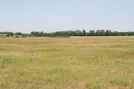 mixed grasslands.jpg