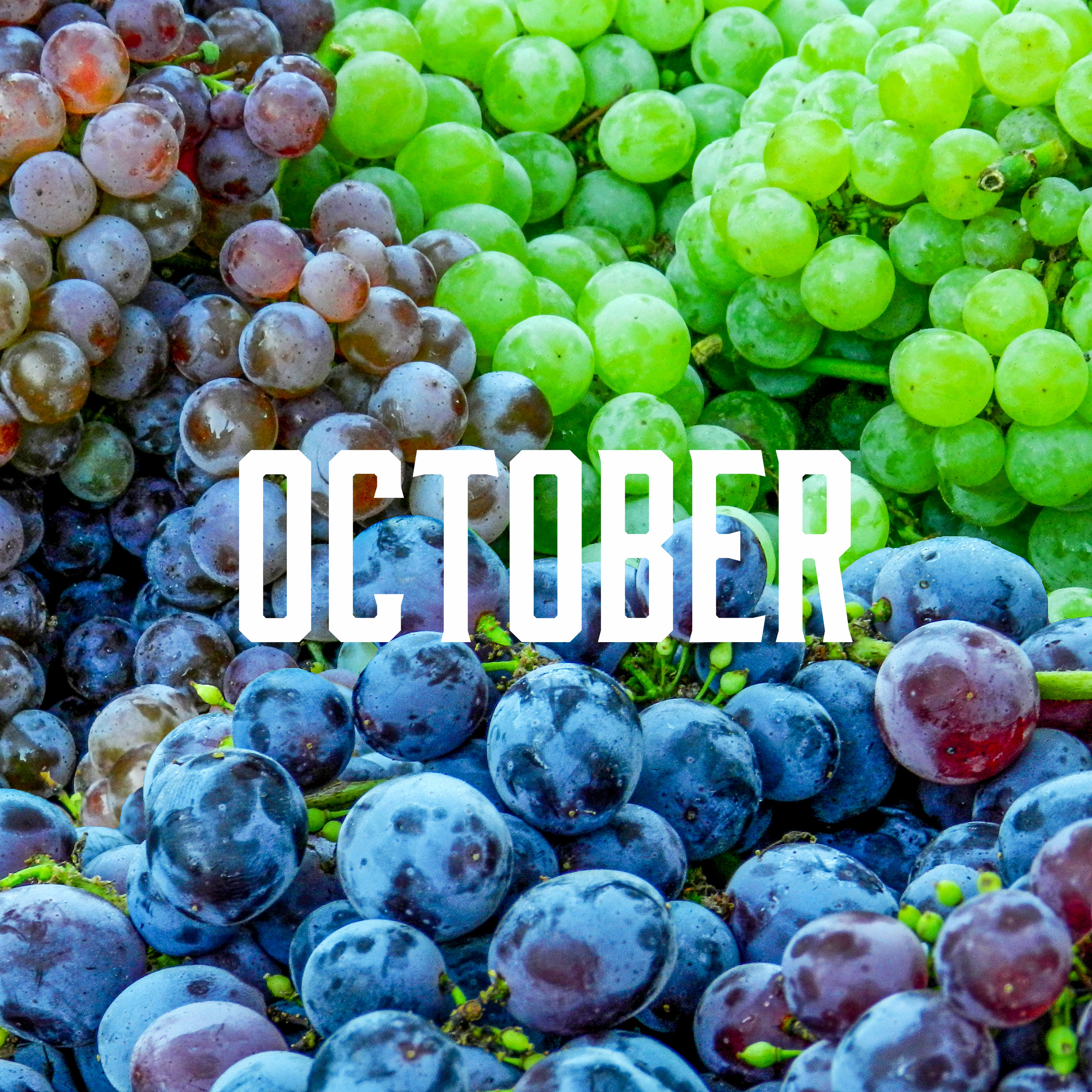 October season - In our last month of the market, we still have tons of great produce to offer!Apples, Artichokes, Arugula, Basil, Beets, Brussels Sprouts, Cabbage, Cantaloupes, Celery, Chard, Chili Peppers, Collard Greens, Corn, Eggplant, Fennel, Garlic, Grapes, Scallions, Kale, Kiwi, Leeks, Lettuce, Melons, Mint, Mushrooms, Onions, Oregano, Parsley, Sweet Peppers, Potatoes, Pumpkins, Radishes, Rosemary, Rutabaga, Shelling Beans, Spinach, Summer Squash, Winter Squash, Thyme, Tomatoes, Turnips, Zucchini