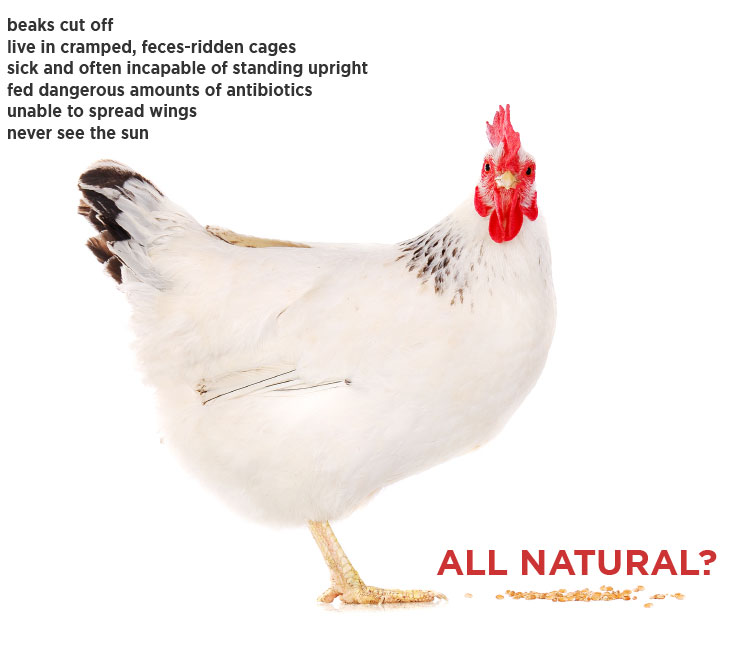 chicken_allnaturalf.jpg