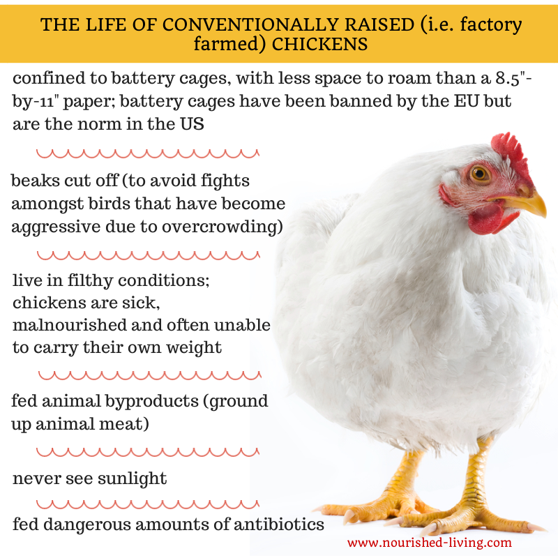 conventionally-raised-chicken.png
