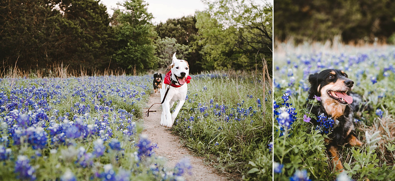 dog-photo-session-austin-walnut-creek_0382.jpg