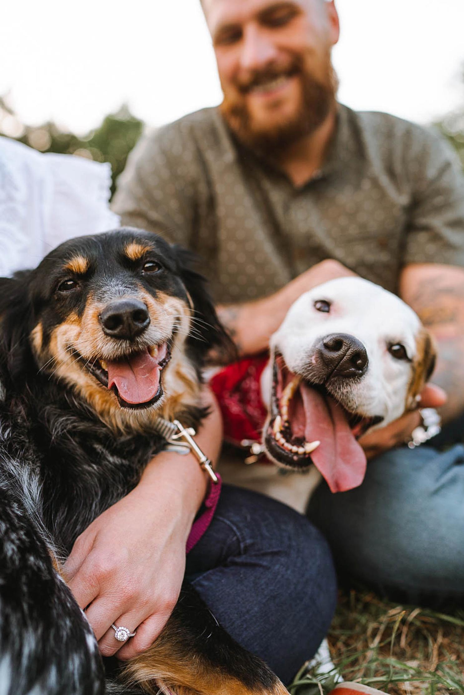 dog-family-photo-session-austin-texas_0387.jpg