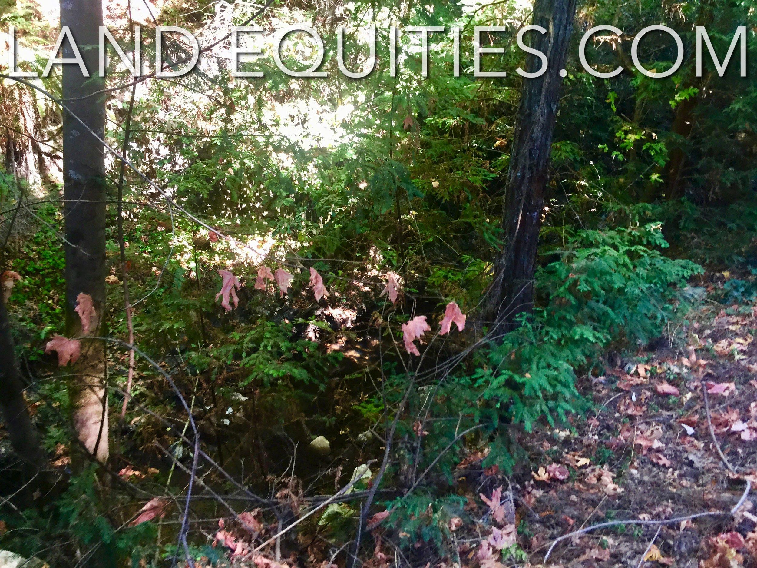 Love Creek-9.jpg