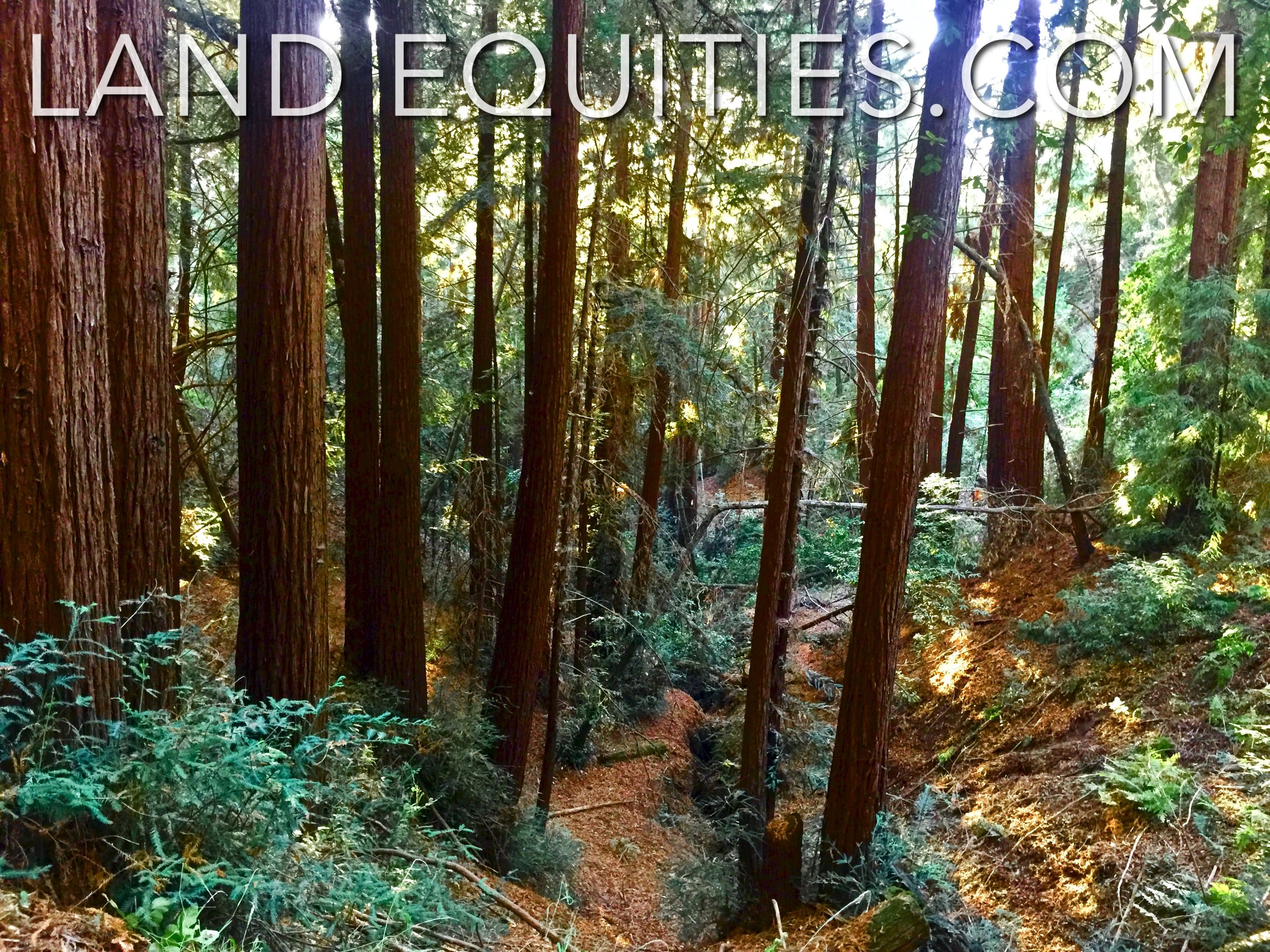 LAND EQUITIES — MAJESTIC  75 ACRE PROPERTY NEAR NISENE MARKS STATE PARK,  REDWOOD DR  APTOS, CA
