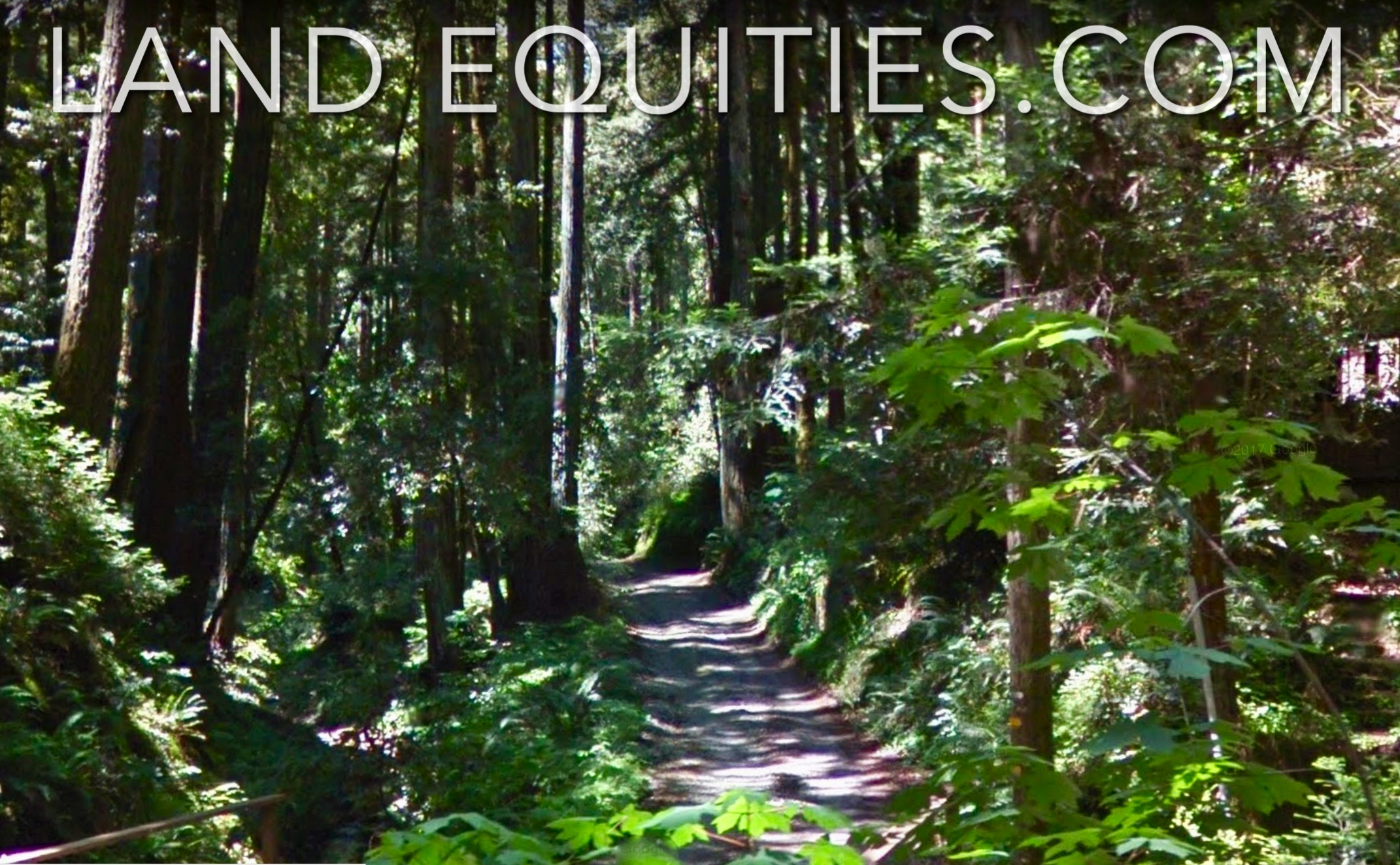 105-081-20 Redwood Dr-5.jpg
