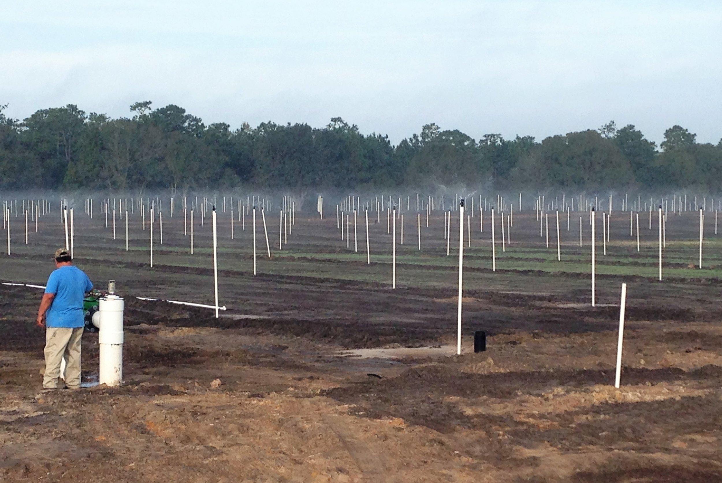 Pressure testing the sprinklers in a new field before planting.