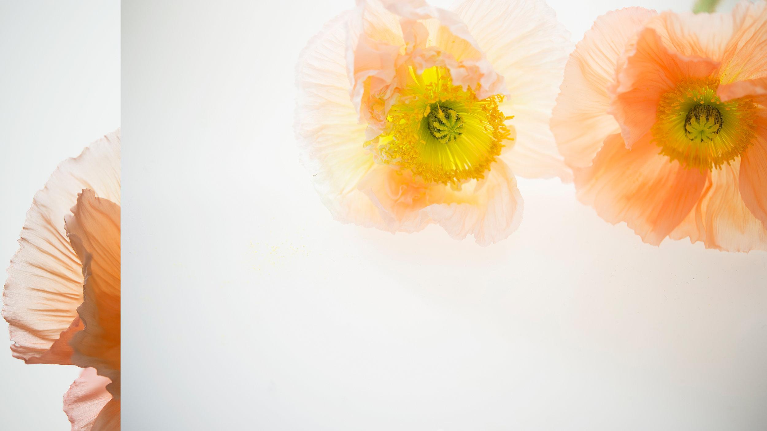 poppies-macro.jpg