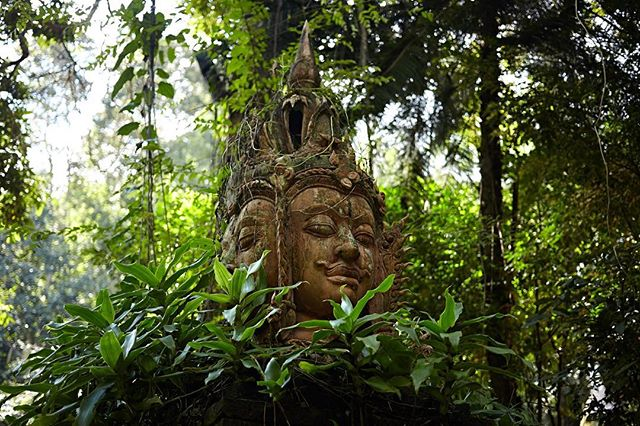 Faces in the jungle, Doi Suthep