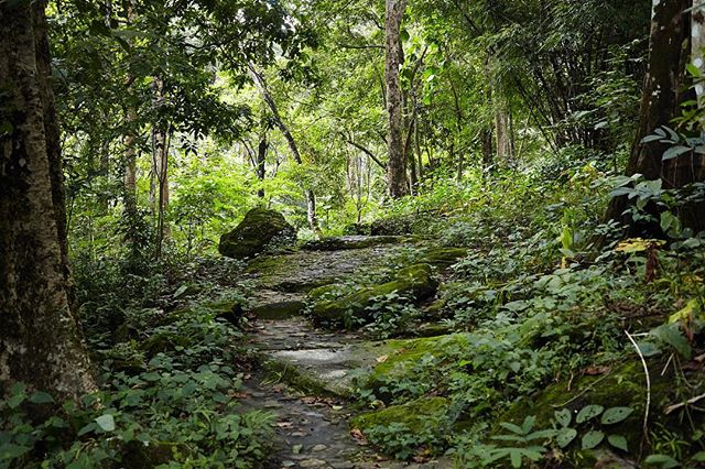 More of the wonderful forest paths up Doi Suthep.