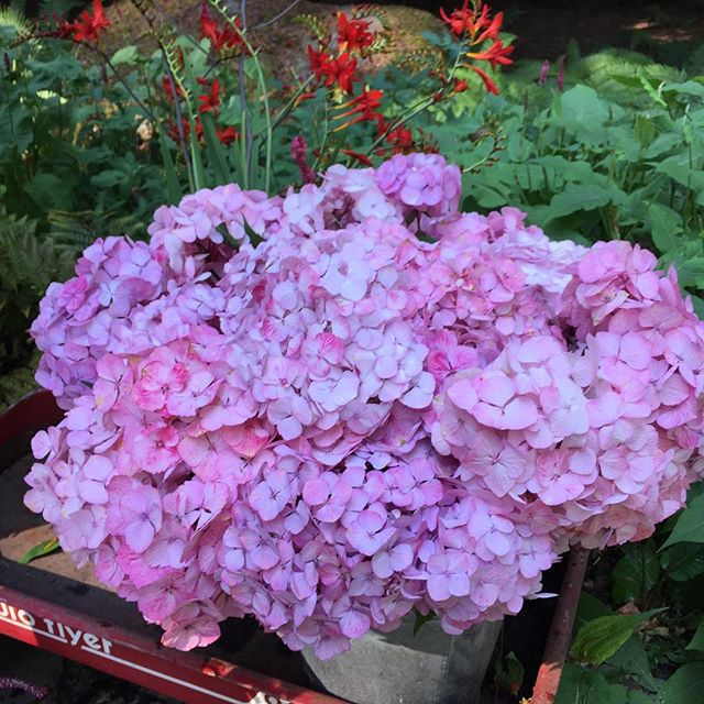 Lovers of pink will not be disappointed today at the Fletcher Bay Gardens flower stand