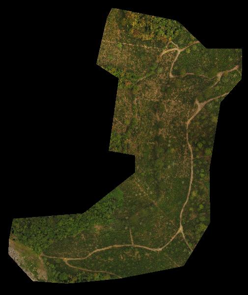 Area (B)