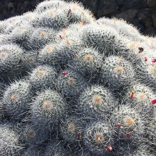 #jardendecactus