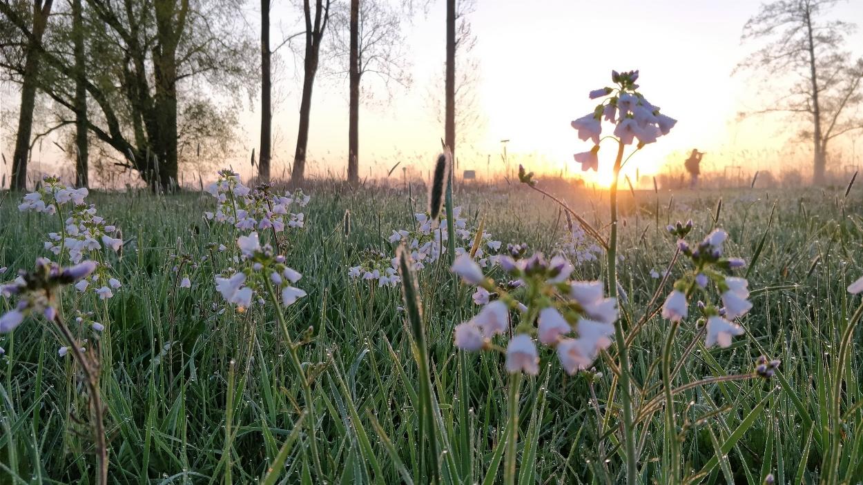 Het Binnenveld heeft grote potentie voor natuur en landschap, natuur-inclusieve landbouw en recreatie.