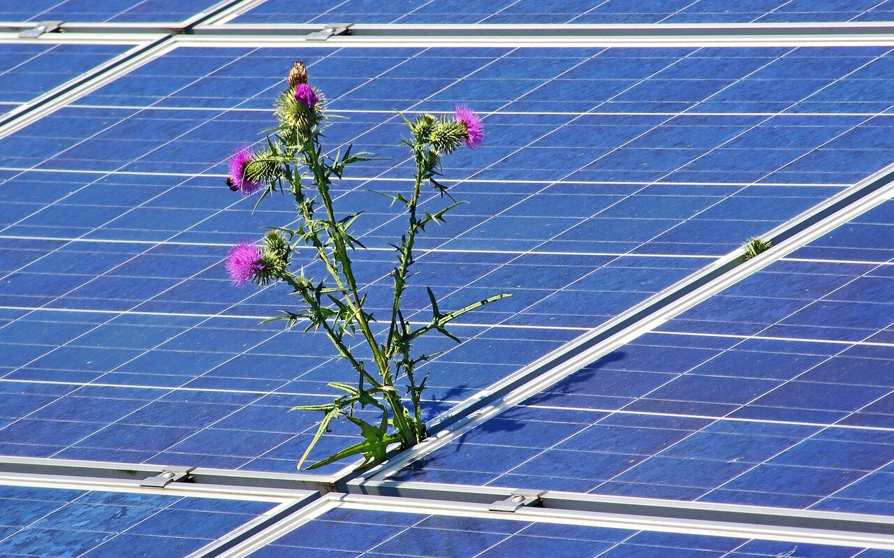 zonnepaneel distel_pixabay_photovoltaic-4244774_1280.jpg