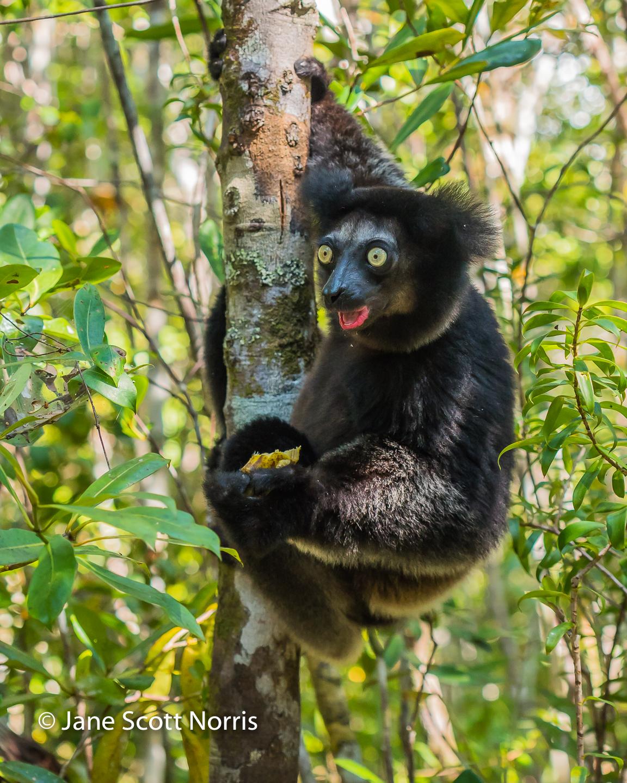 Madagascar Oct 2016