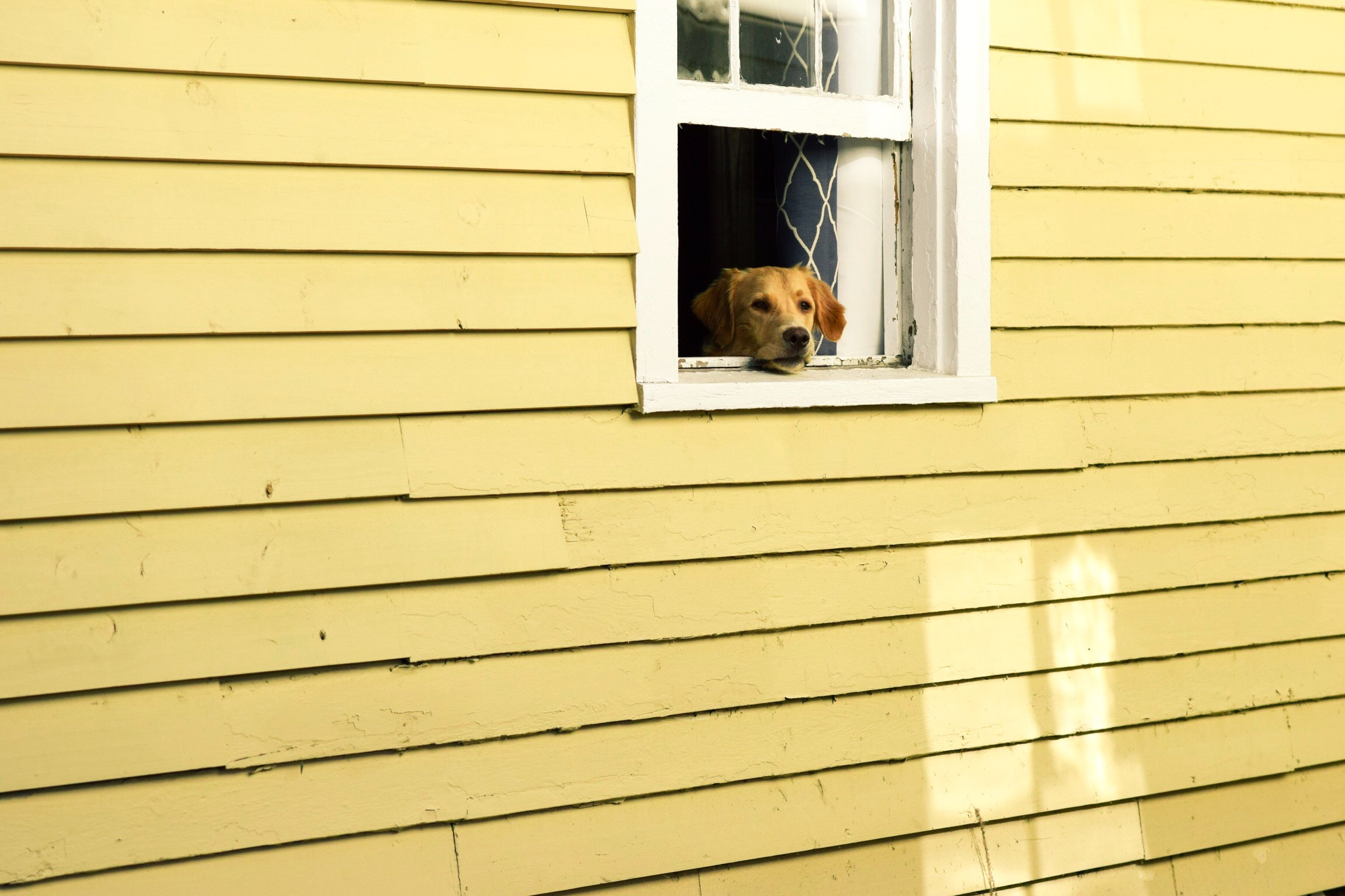 stephen-wawryk-blog-dogs.jpg