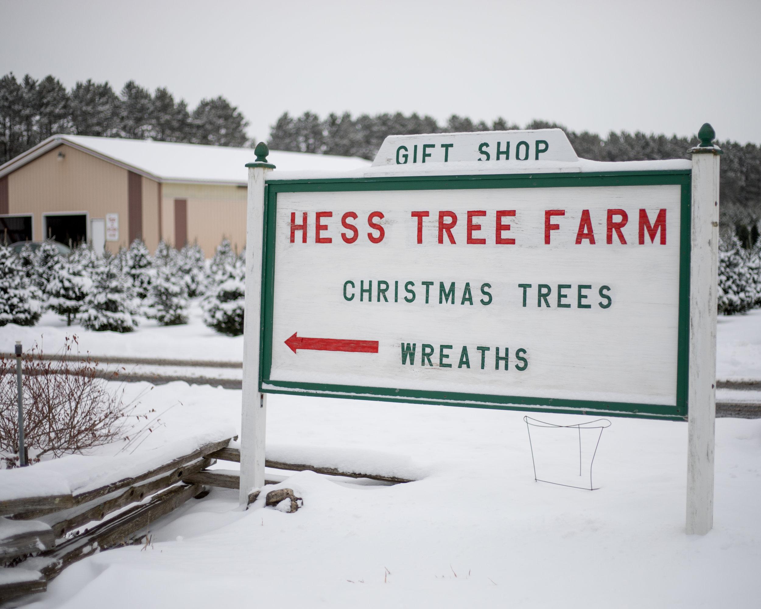 Hess Christmas Tree Farm -Wisconsin Rapids, WI