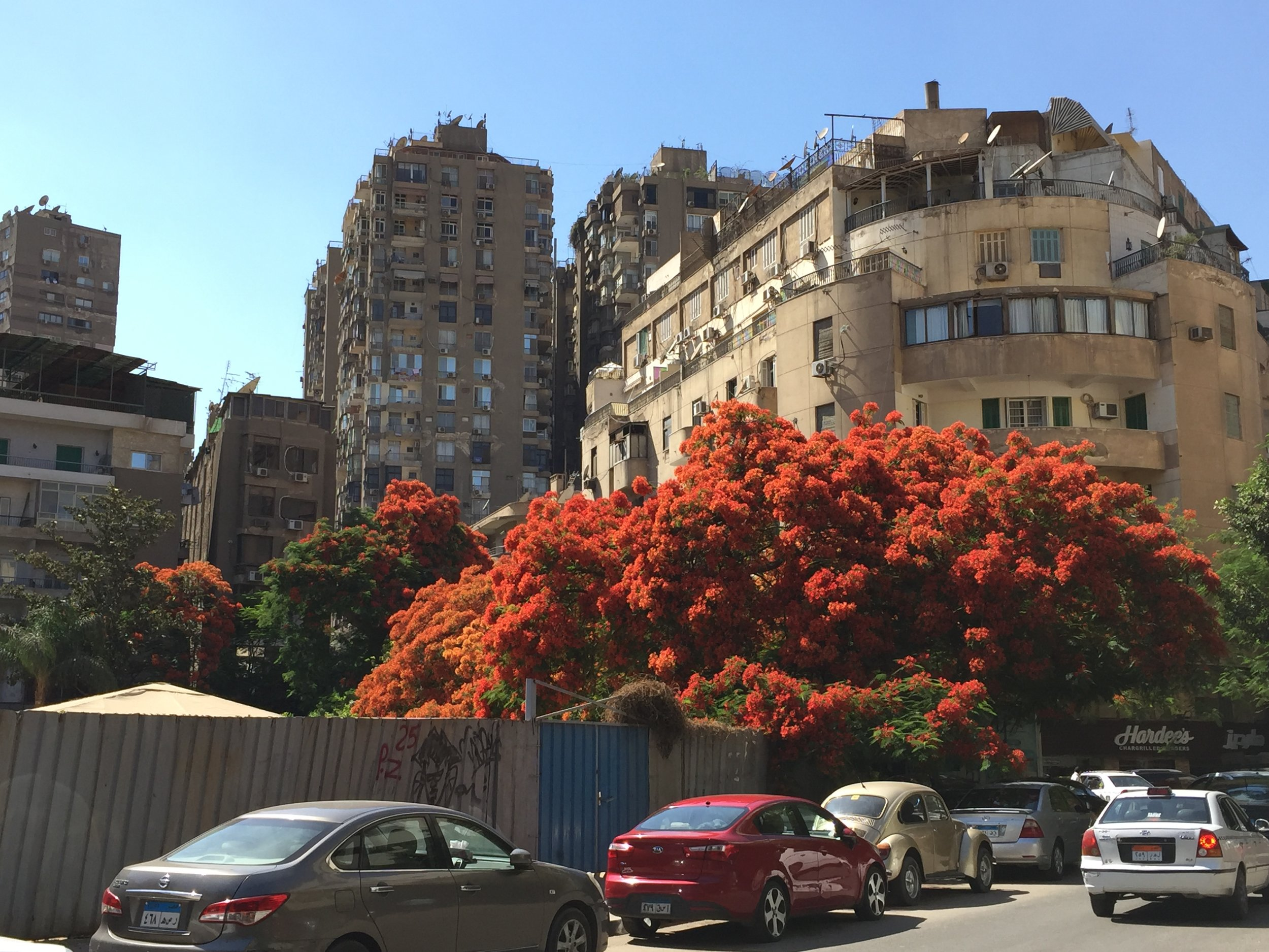 A street by our hotel in Zamlalek. Most of Cairo looks like this.