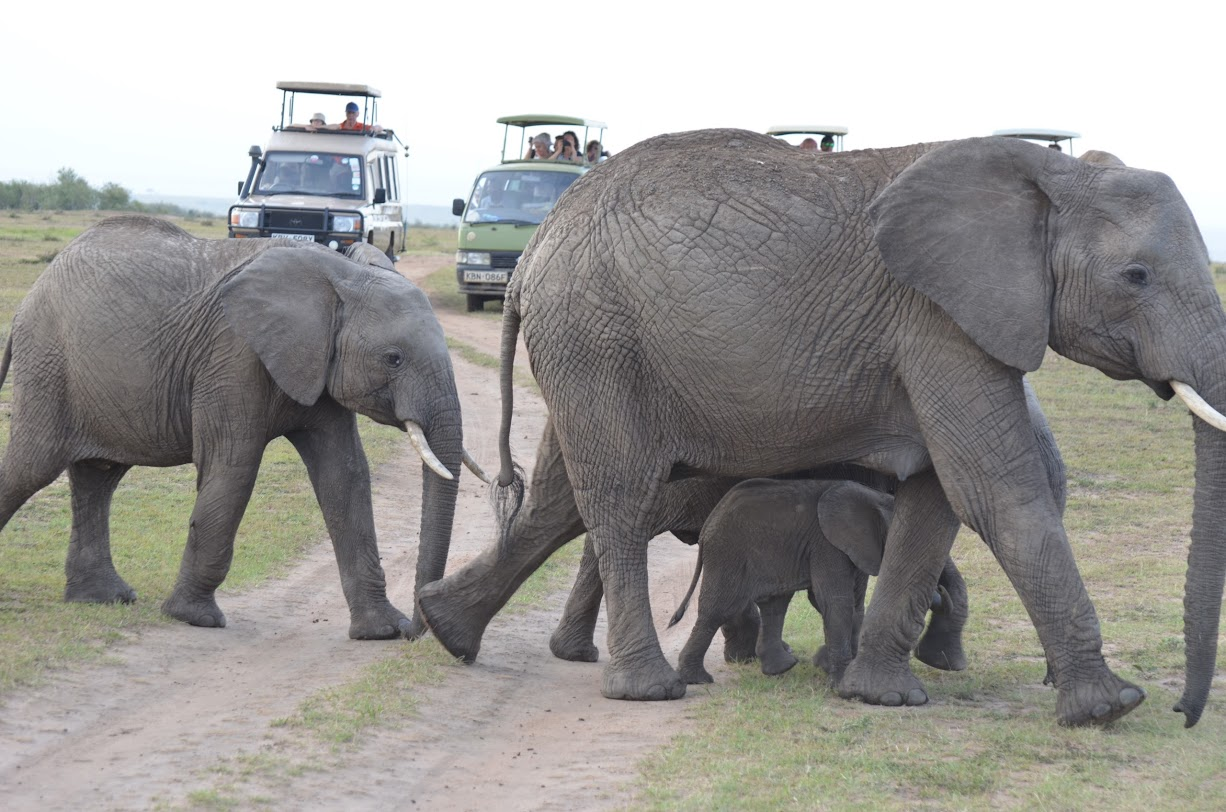 A good idea of how little the animals care about trucks of safariers.