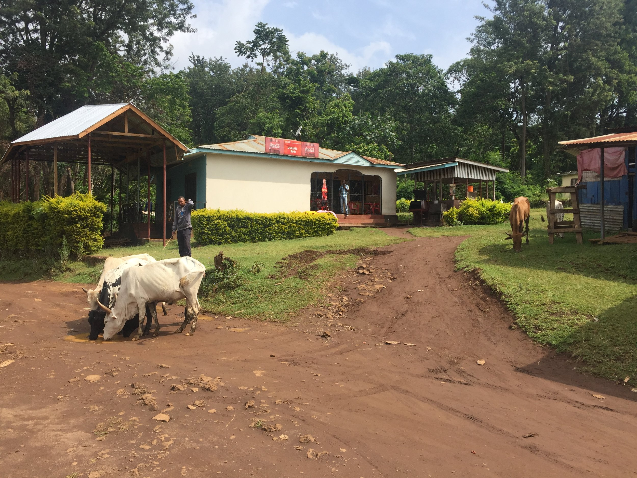 A small town in the foothills of Kilimanjaro.