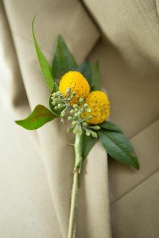 lillie jane wedding groom