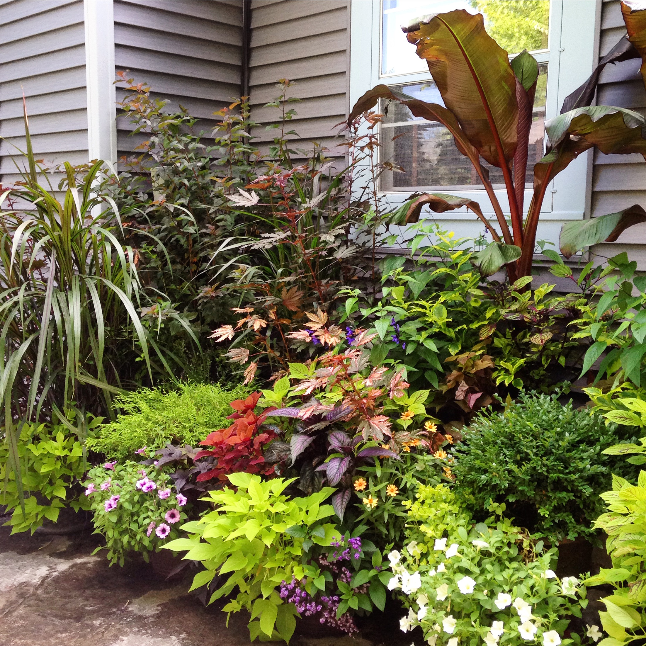 Summer flowers container design at schönheit Gardens in Madison, wi.