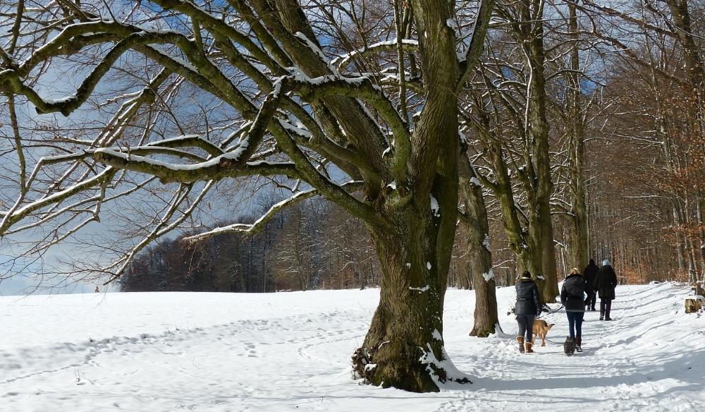 tree-91911_1280.jpg