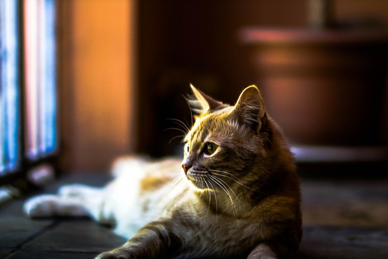 screw_the_average_house_sit_kitten.jpg