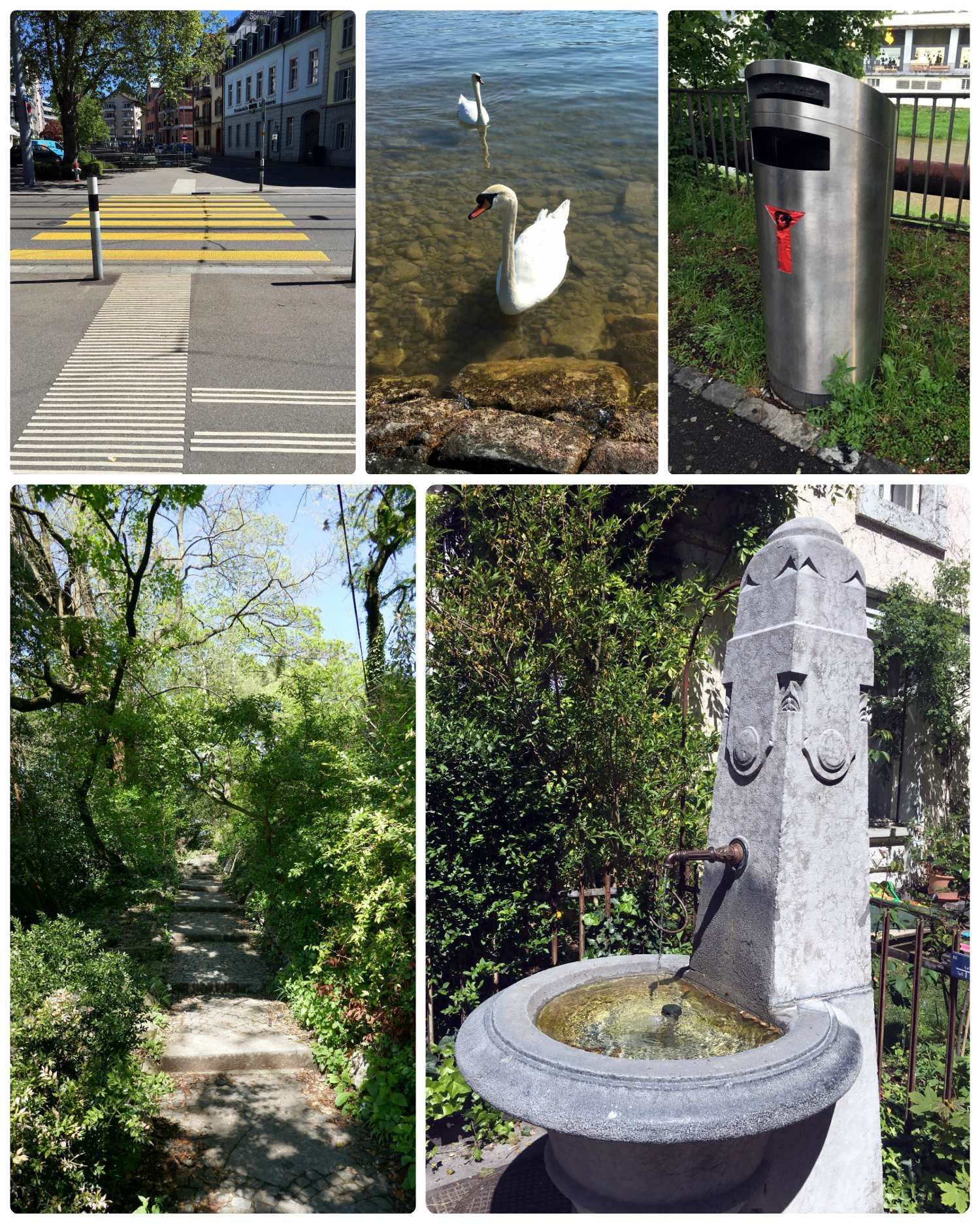 Clockwise (from the top): The paint on the street markings was bright and well defined, we saw more swans on Zurich Lake than we've seen anywhere else so far, a view into a beautiful green park, one of the  1200 fountains  around Zurich.
