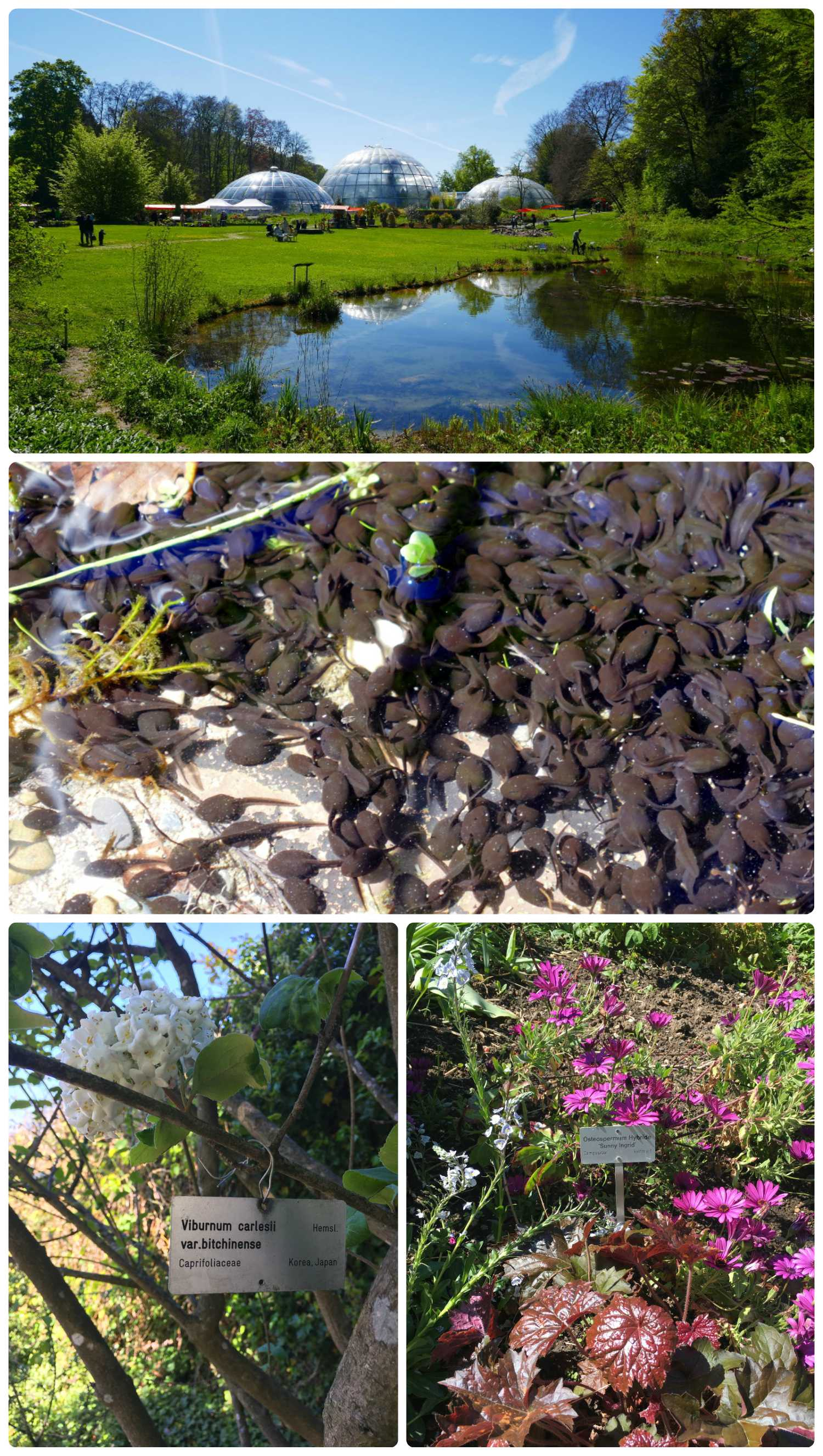 All images are of the Botanical Gardens. Top to bottom: Green house domes reflecting in the pond, after a closer look we saw thousands of tadpoles in the pond, (bottom two images) showing how everything seemed to be well labeled.
