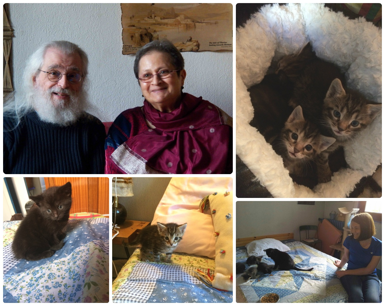 Clockwise (from the top): Homeowners and friends - Daniel and Nicole, the curious kittens in their bed, Shannon with the kittens and their mama as they ate their first solid food, one of the adventurous kittens who climbed on the bed, the solid black kitten just like its mama.