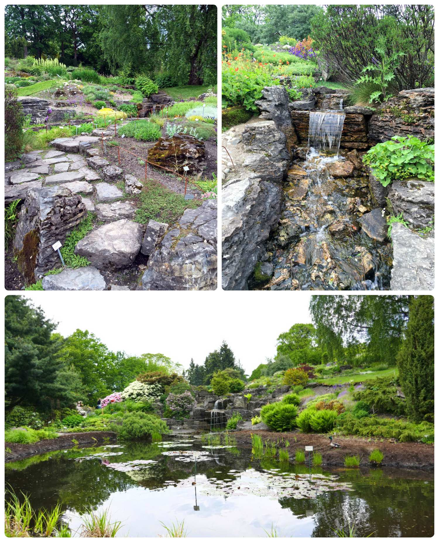 Ponds and waterfalls in the University Botanical garden.