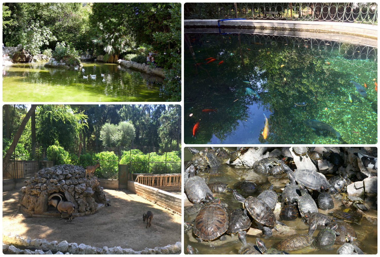 We were surprised to find a variety of animals, from turtles and Koi fish in the ponds to a micro zoo in the middle of the National Garden!