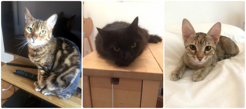 Left to right: Vesper, Roland, Lilo.