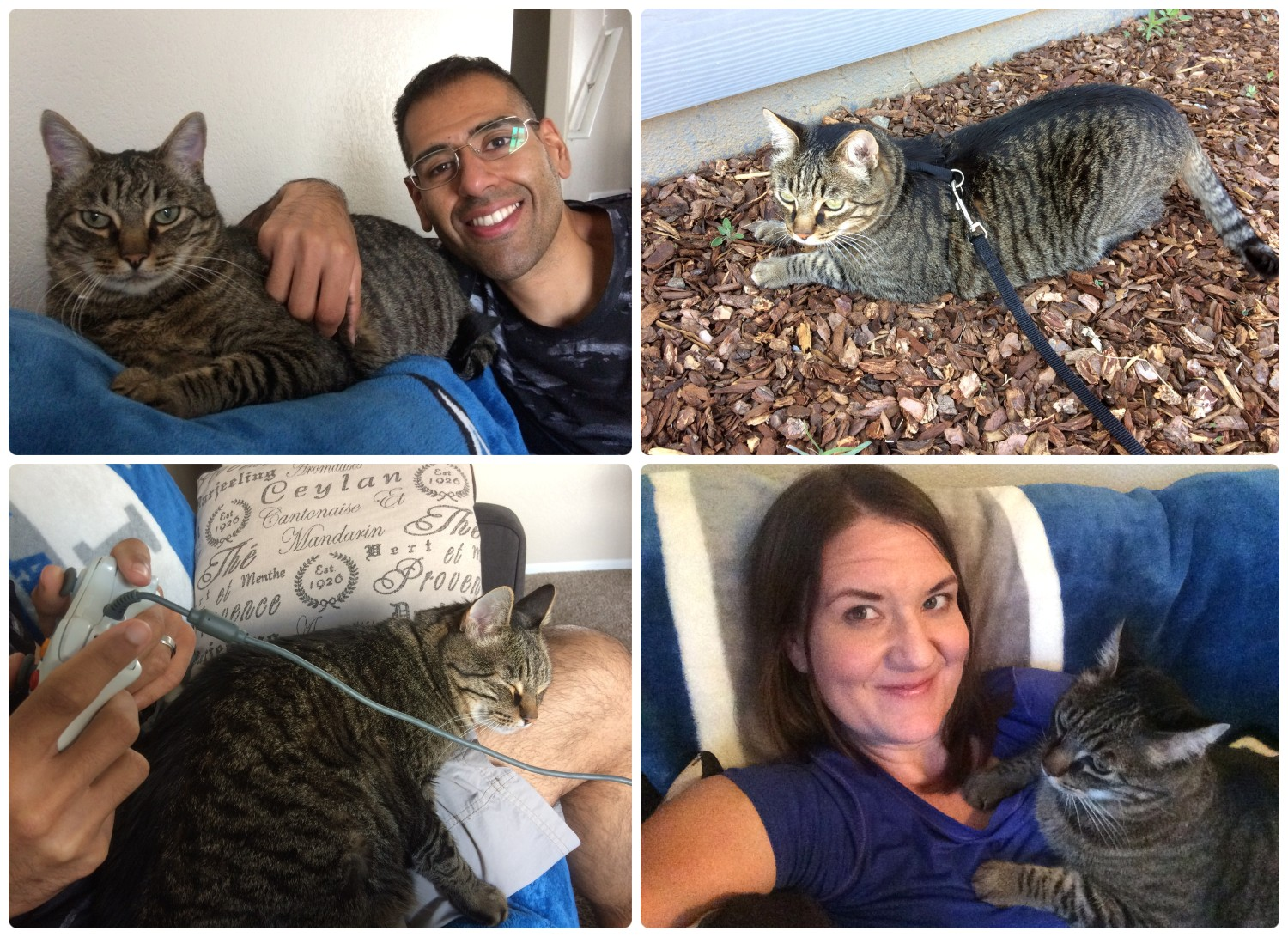 Cupid at our Greeley, Colorado House Sitting Job: He loved to cuddle, even when we were playing video games! ... On the other hand, put a leash on him and he'd just fall to the ground!