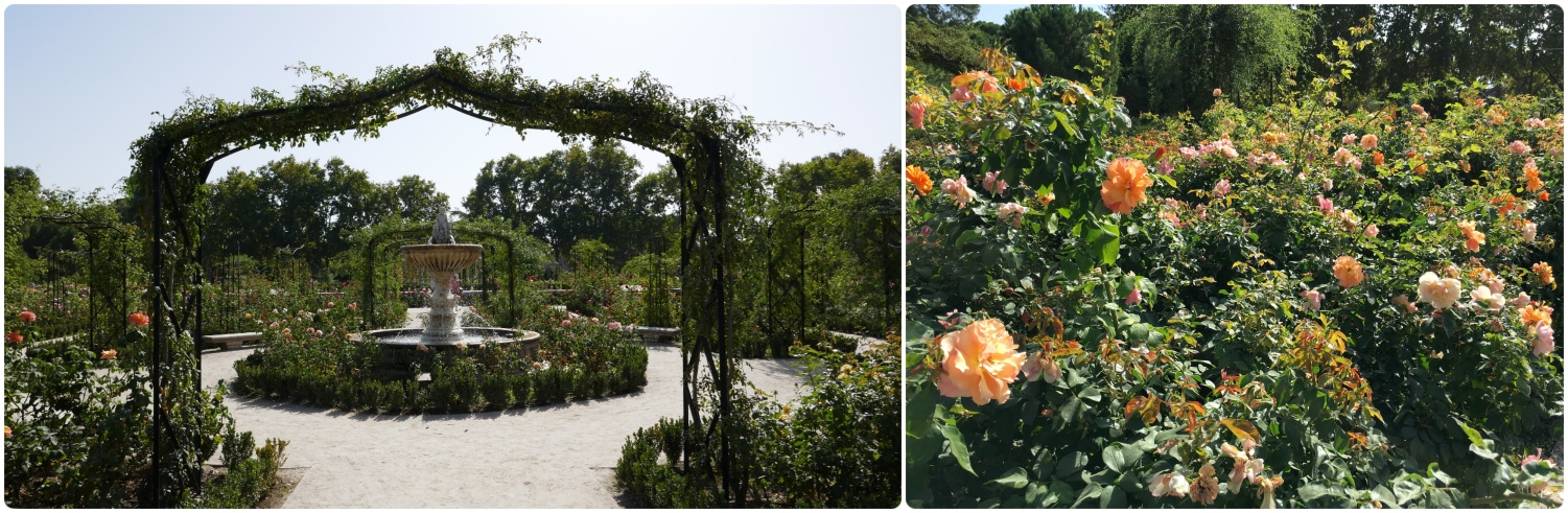 The Rose Garden (La Rosaleda) in El retiro Park, Madrid, Spain.