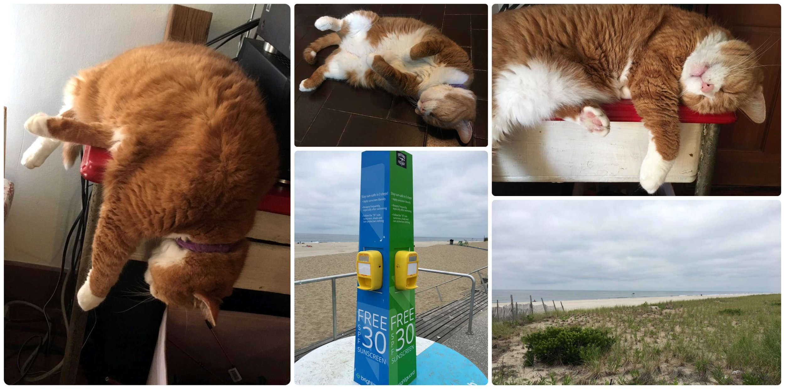 House sitting in Rockaway Beach, Queens, New York! Stinky is doing what he does best… sleeping! Not every day was overcast at the beach, so free sunscreen stations can be found on the boardwalk!